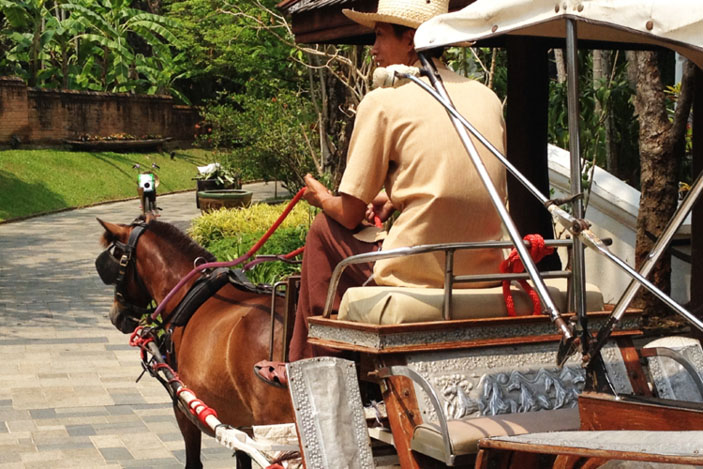 A good way to get around Dhara Dhevi if you're not up to pedalling.