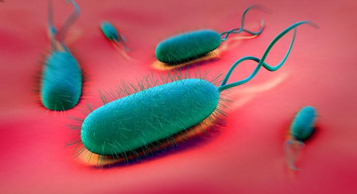 h-pylori bacteria