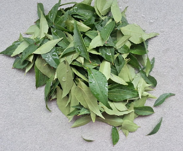 fresh-curry-leaves_nov-2018-wk1