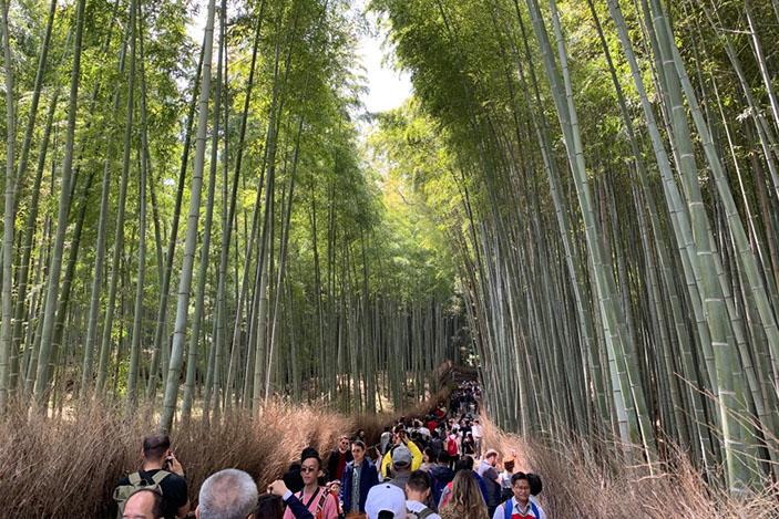 sagano bamboo storm.sg