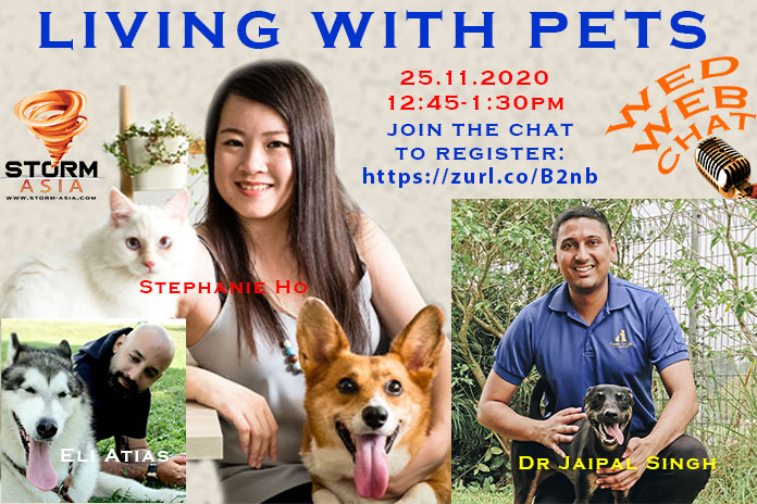 WED WEB CHAT pets 251120